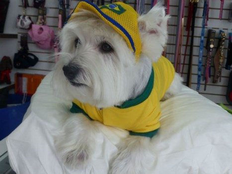 Roupas-de-cachorro-do-Brasil 2