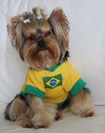 Roupas-de-cachorro-do-Brasil